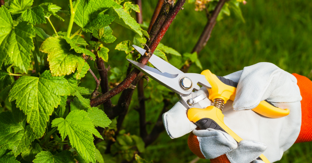 Image of shears for blog post about pruning.